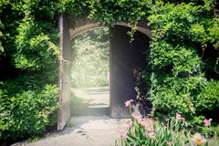 Old wooden gate with lianas Stock Image