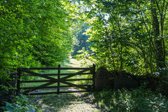 Old wooden gate in a lush greenery royalty free stock image