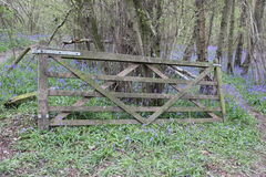 Old wooden gate in woods Royalty Free Stock Image