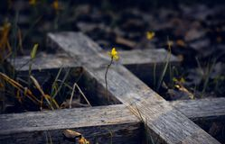 The old wooden grave cross and young sprout stock photos