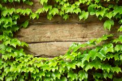 Old wooden with green frame Stock Photography