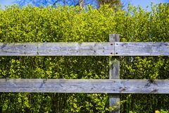 Old wooden grey fence covering green shrub bush in country side village. Good background.  royalty free stock photography
