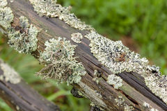 Old wooden handrail overgrown with moss. stock images