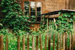 Old wooden house cabin with aged window and green plants in summ Royalty Free Stock Image