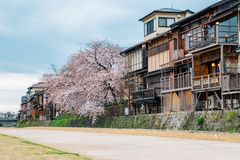 Old wooden house with cherry blossom near Kamo river at Gion, Kyoto, Japan Stock Photos