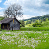 Old wooden house in meadow. Rural landscape. Royalty Free Stock Images