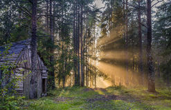 Old wooden house in pine forest at sunset. Abandoned old wooden house in outskirts of pine forest at sunset with rays of sunlight Stock Image