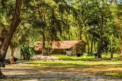 Old wooden house in a tropical park Stock Images