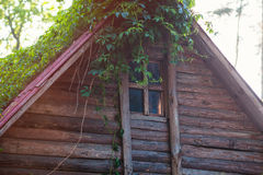 Old wooden house with window and plant on the roof Royalty Free Stock Photos