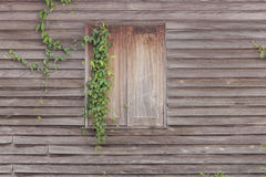 Old wooden house window texture. With ivy growing Royalty Free Stock Images