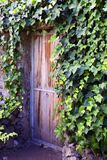 Old wooden ivy door in the garden of Tenerife,Canary Islands. Architecture detail for background or texture.Soft focus Stock Photos