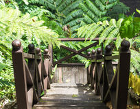 Old wooden ladder with   fern leaves. In jungle Stock Images