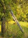 Old wooden ladder in the garden. Old wooden ladder leaning against the apple tree in overgrown garden royalty free stock photography