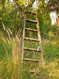 Old wooden ladder leaning against the apple tree. In overgrown garden royalty free stock photo
