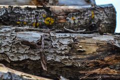 An old wooden log for a fire or a stove.  Stock Photo
