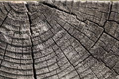 Old wooden log section background Stock Photo