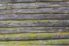 Old wooden logs wall covered with green moss Stock Photos