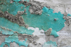 Old wooden maritime background with fossils in green. Old wooden maritime background with fossils in green or turquoise Stock Image