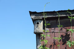 Old wooden nesting box on the rooftop Stock Image