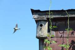 Old wooden nesting box on the rooftop Stock Images