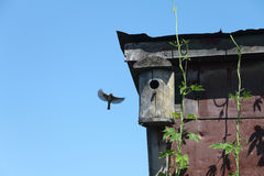 Old wooden nesting box on the rooftop Stock Photography