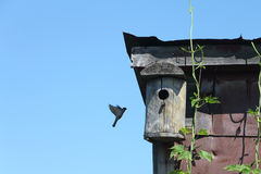 Old wooden nesting box on the rooftop Royalty Free Stock Image