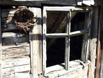 Old not living home window in village, Lithuania. Old wooden not living home window   in village in spring royalty free stock photo