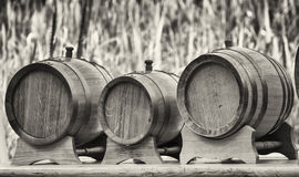 Old wooden oil casks Royalty Free Stock Image