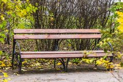 An old wooden painted brown color beautiful bench with black wrought-iron legs stands by the walkway on a bush hedge background royalty free stock photos