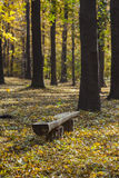Old wooden park bench in autumn Stock Photo