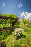 Old wooden pergola covered with flowers Stock Image
