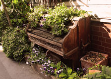 Old wooden piano on the street covered with ivy, violets and flowerpots Stock Photography