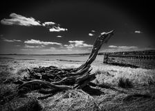 Old wooden pier at Sharpness Royalty Free Stock Images
