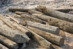 The old wooden piles placed on the ground Royalty Free Stock Image