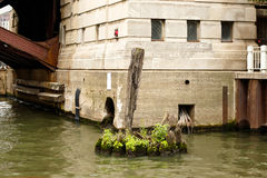 Old, wooden piling in a river stock image