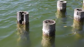 Old wooden pillars in water stock video footage