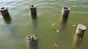 Old wooden pillars in water stock footage
