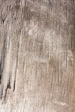 Old wooden plank texture, shabby faded weathered surface tree with cracks and scratches, ancient wood board, abstract background, royalty free stock images