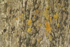Old wooden pole covered with mosses Stock Photography