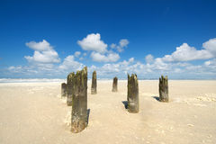 Old wooden poles at the beach Stock Photo