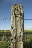 Old Wooden Post. Weathered old wooden Post With Barbed Wire Stock Images