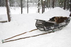 Old wooden reindeer sleigh, Sweden Stock Photo