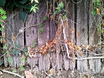 Old wooden rotten fence Stock Images