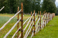 Old wooden russian fence. Old wooden russian north fence near barley field Royalty Free Stock Photo