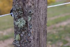 Old wooden rustic fence post with moss and wires stock image