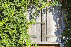 Old wooden rustic window closed with the shutters Stock Photos