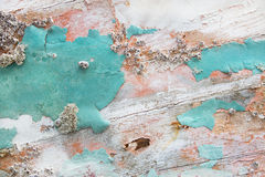 Old wooden shabby chic background with aged calcification of mus Royalty Free Stock Photos