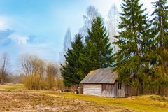 Old wooden shed among firtrees and birches. Belarusian village royalty free stock images