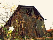 Old wooden shed Royalty Free Stock Images