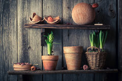 An old wooden shelf with plants and clay pots Royalty Free Stock Images